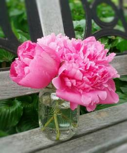 Pink Peonies in Mason Jar by Shalom Schultz