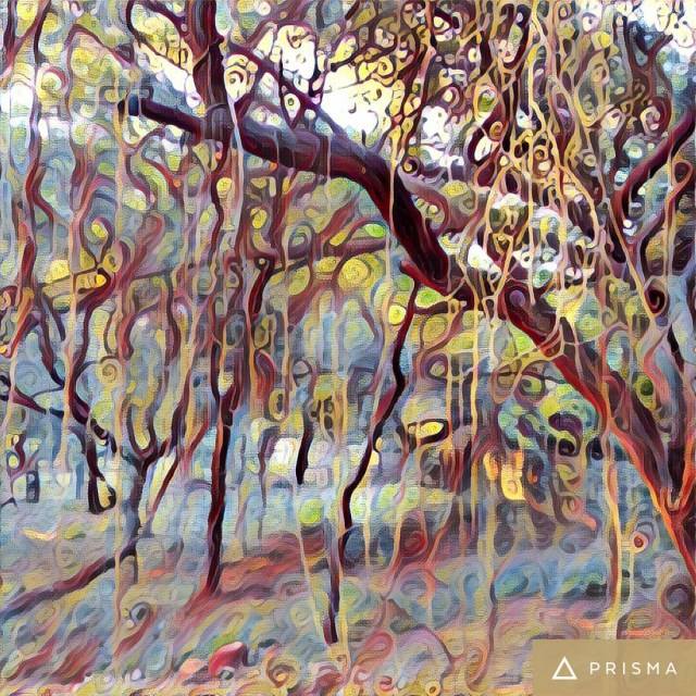 wispy-twigs-hanging-from-branches-of-tree-mehrauli-archeaological-park-prisma- effect-photoeffect-#fridayfiction