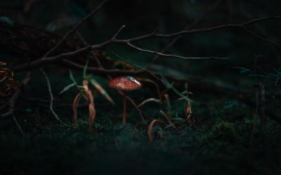 Psilocybin Mushrooms – Effects on Your Brain