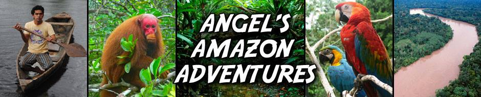 Angels Amazon Adventures