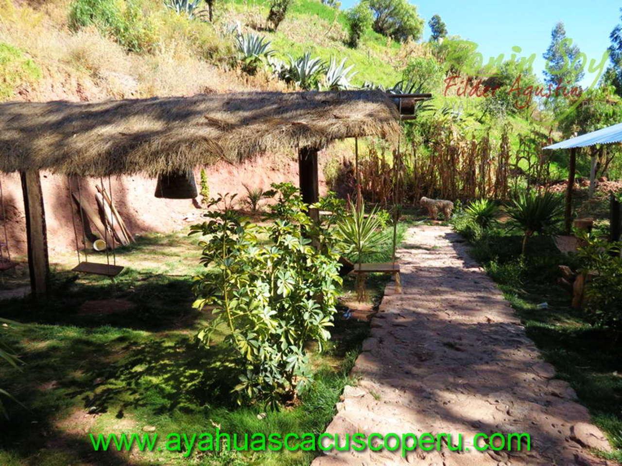 Ayahuasca Perú