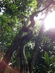 Sachamama Ethnobotanical Garden