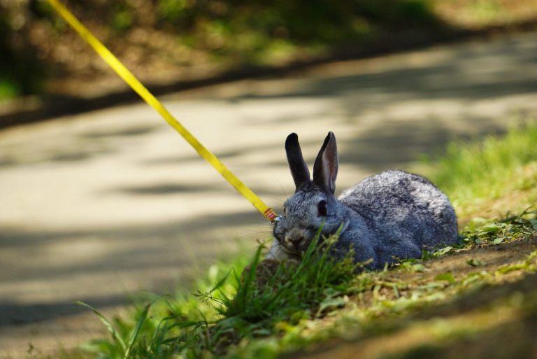 Даже кроличек пришёл смотреть на флоксы.
