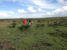 Farmer and crew survey the shamba