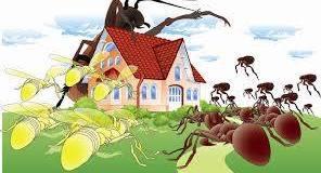 شـركـة مكافحة نمل ابيض بالدمام