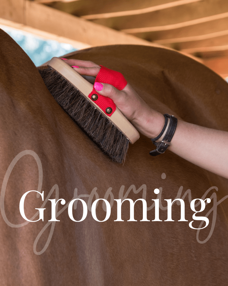 Favorite grooming products, mane-ly long hair