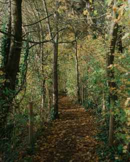 pathway near fence between forest in fall