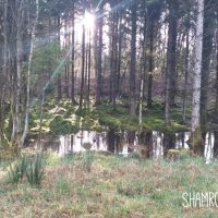 Center Parcs Longford Forest Review