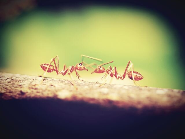 Hustle like an Ant (Mindset to Acheive Your Goals)