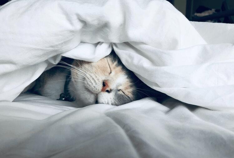 Got Sleep? (6 Reason Why Sleep is Important to Your Health)