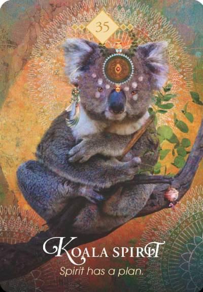 spirit animal tarotkort koalabjørn