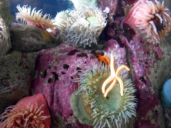 Scene at Monterey Bay Aquarium