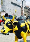 Bee Cow Prague, 2004