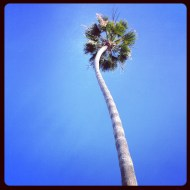 Bendy Palm Tree