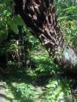 Inside the fern garden