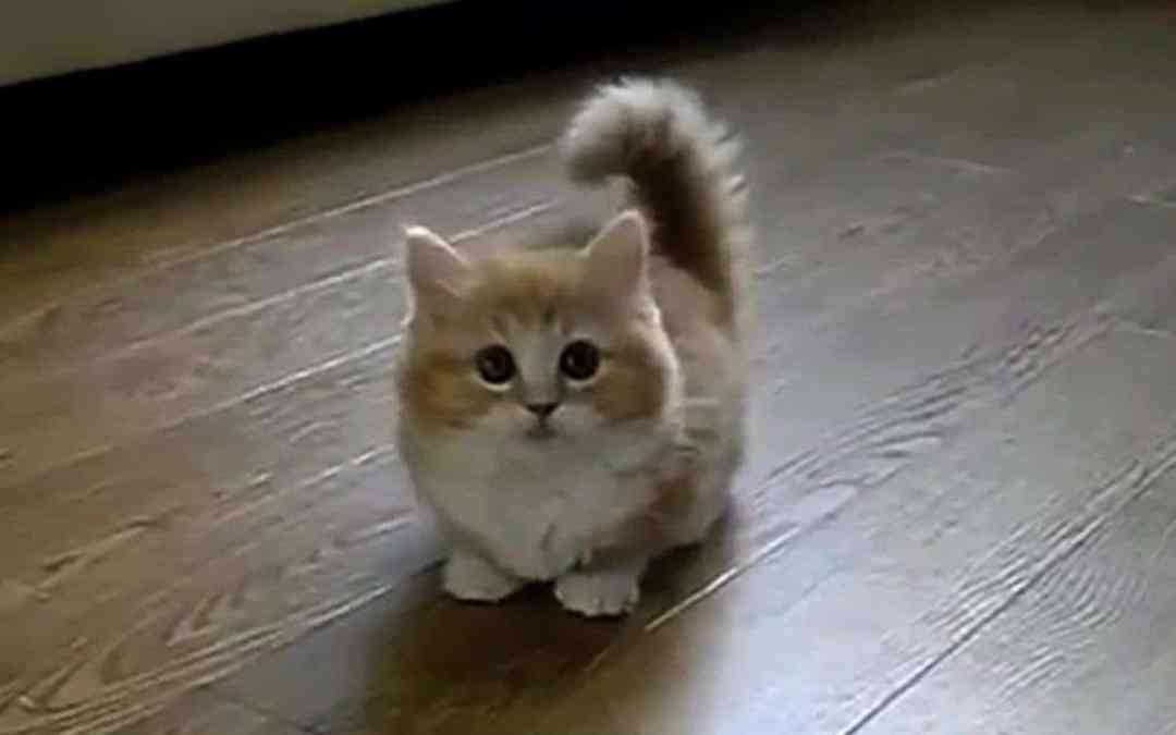 The Best Cat Video you will Ever See !