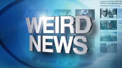 weird news