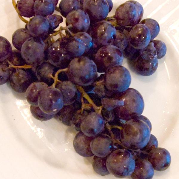 Grape-Concord-Seedless-Shaner-Avenue-Nursery