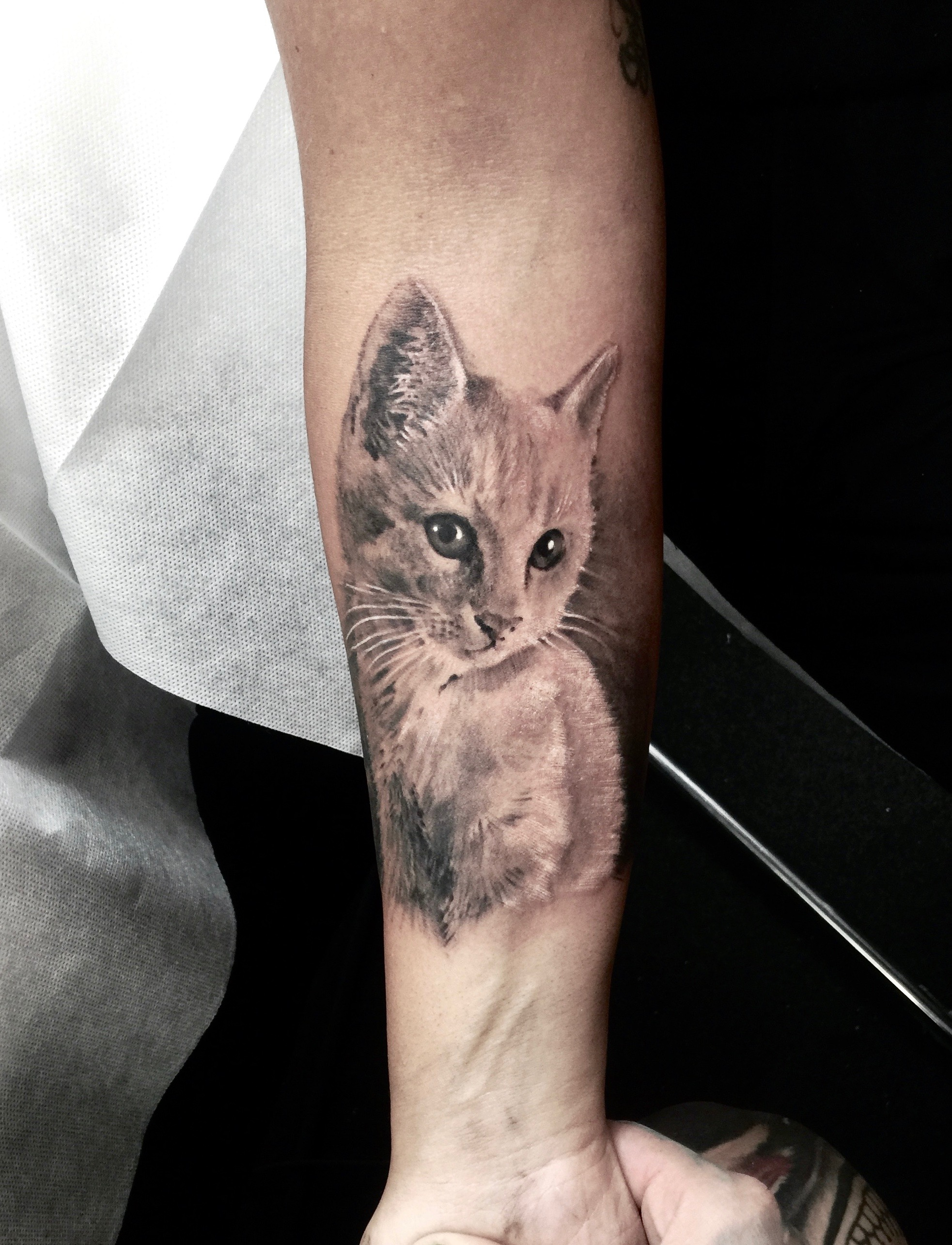 zhuo dan ting tattoo work cat tattoo卓丹婷纹身作品 猫咪纹身