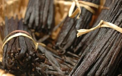 Shank's Pure Vanilla Extract