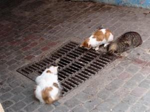 Essaouira Medina 14