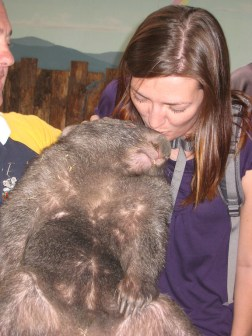 Kissing a wombat in Australia