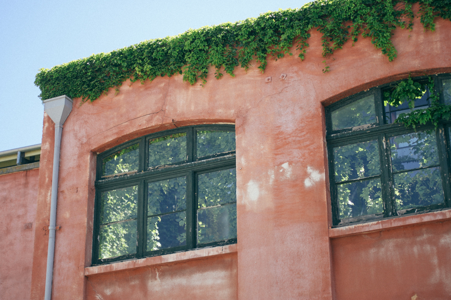 Overgrown ivy in a Fremantle building.