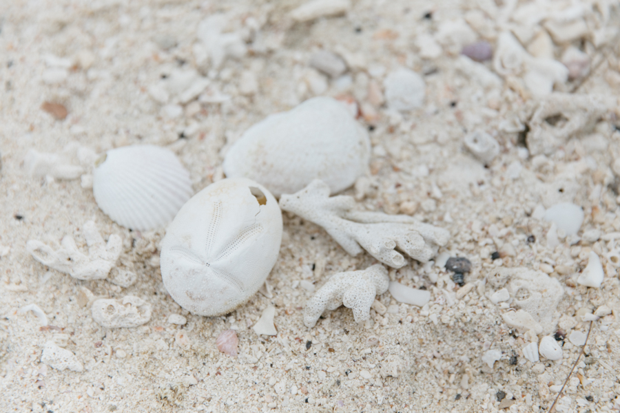 Shell collecting, beach combing in Thailand.