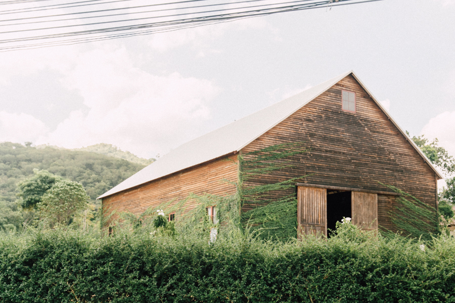 Ivy covered building in Thailand.