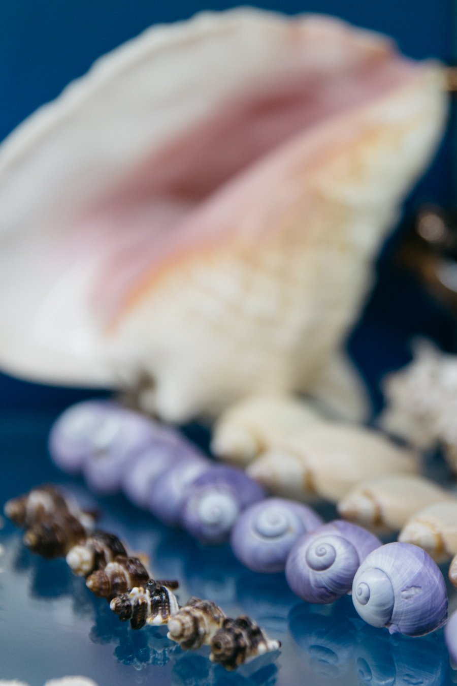 Purple sea shells.