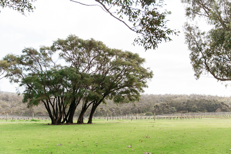 Red Gate vineyard in Margaret River.