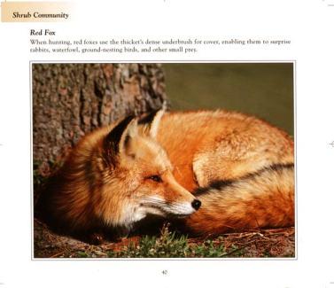 book_fox1