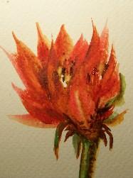 aceo72-fireflower.jpg