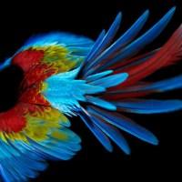sølve sundsbø: perroquet.
