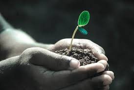 EVERY SEED HAS POTENTIAL