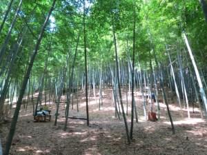 たけのこ狩り 山崎竹林園