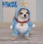 犬用の着ぐるみ(コスチューム)!話題の二足歩行やコスプレグッズ