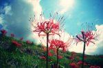 彼岸花が見れる九州の観賞名所