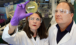 Sandia researchers Amanda Kohler and Ken Sale study the bacteria they used to produce LigM.