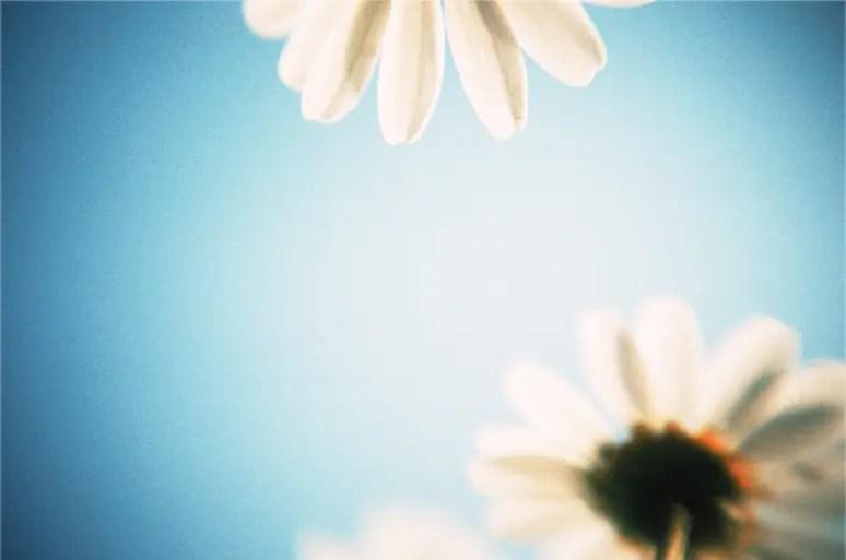 ISO100のフィルムで撮った写真