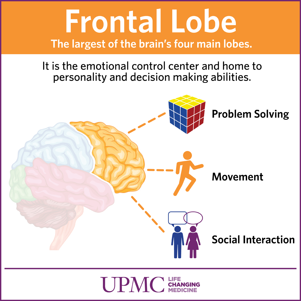 Frontal Lobe Carries Out Higher Mental Processing Conce