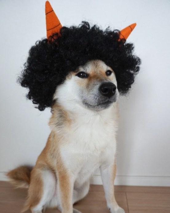 dog13