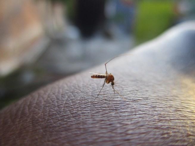 mosquito-2566773_1280