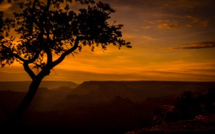 G Canyon (Trees) http://wp.me/pSlDL-bx8