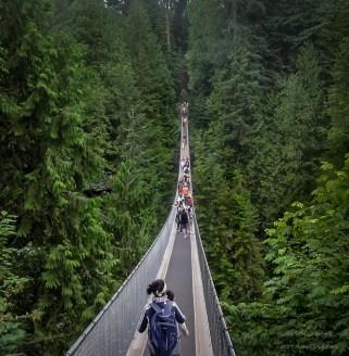Susp Bridge-Narrow
