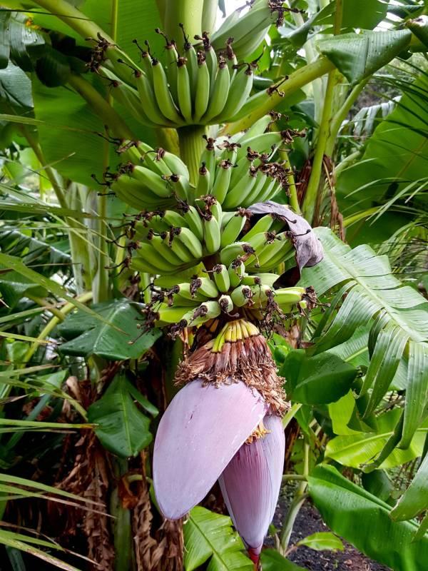 Bananarama in Rocky Bay 1
