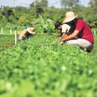 Edital vai destinar R$ 10 milhões a projetos de agroecologia e produção de alimentos