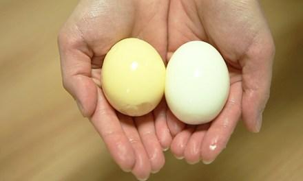 이색 계란 '골든 에그' 만들기