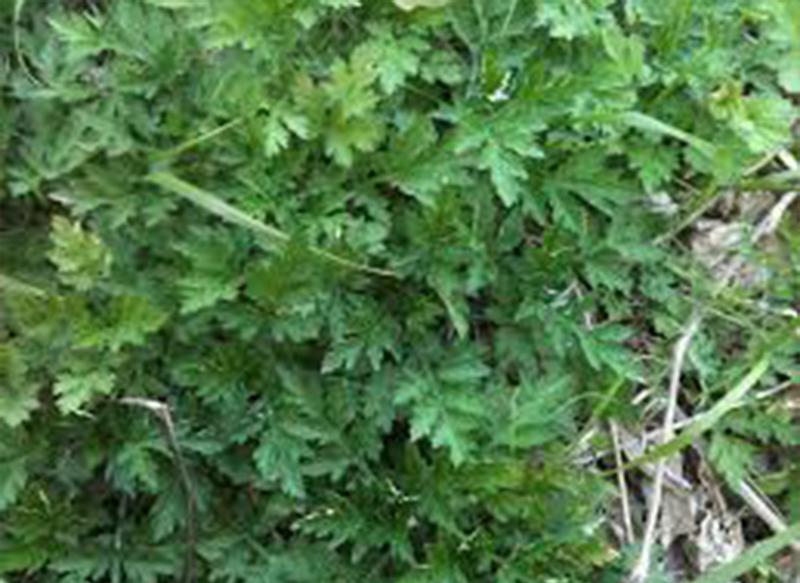 spring greens 03