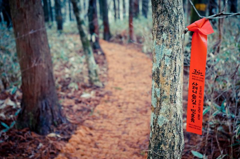 forest walking 04